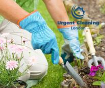 gardening-service-urgent-cleaning